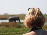Elefanten am Camp