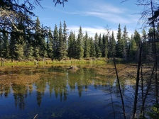 Pond near Louise Falls